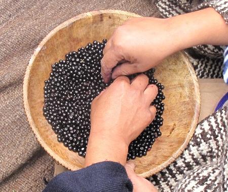 mujeres Mapuche con pocillo de maqui 450x380